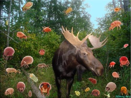 Miteome_Moose Pasture Moose